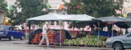 Как выбрать спелый арбуз в Новомосковске